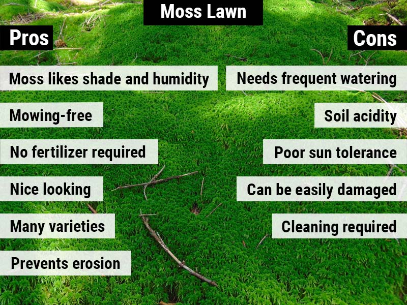 moss-lawn-pros-and-cons