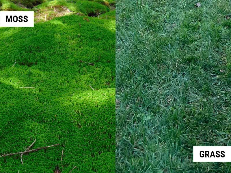 moss-vs-grass