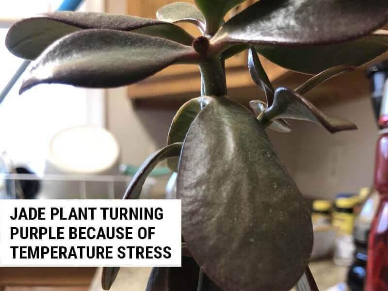 Temperature stress