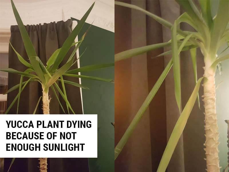 Not enough sunlight